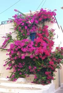 Greece - Flowers